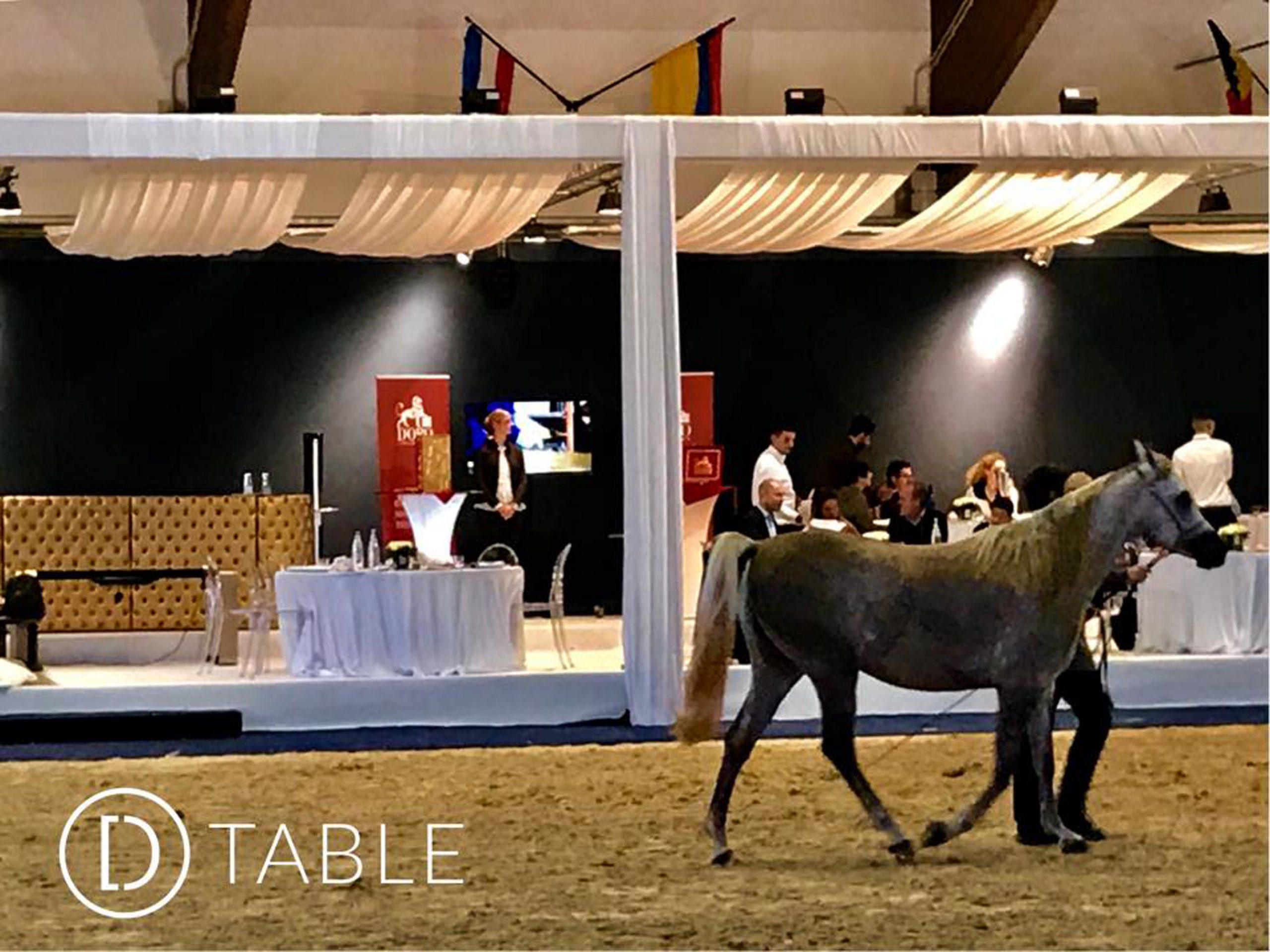 D-Table Straight Egyptian World Championship